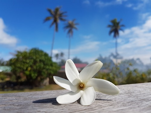 A traditional Tahitian flower