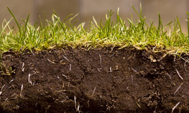 Grass Revit