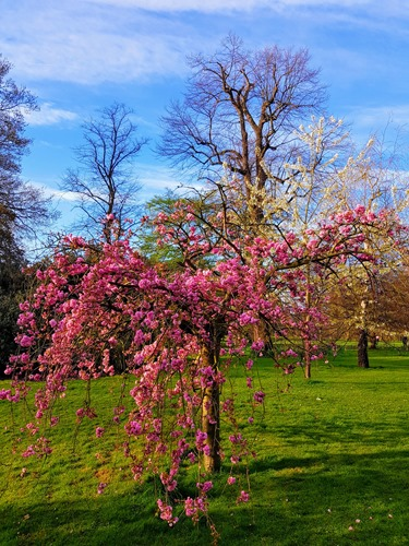 Blüten im Hyde Park