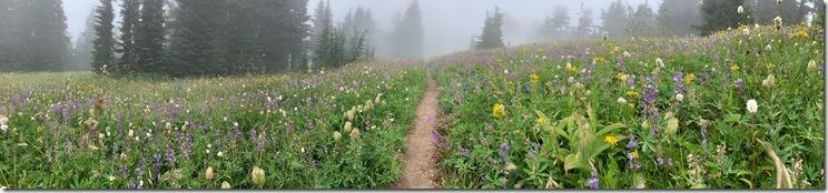 Paradise Park Wildflowers